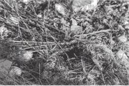 Detalle de la vegetación chamuscada que encontró Bruno Cardeñosa