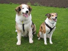 Little Sal and Jasper bigdog