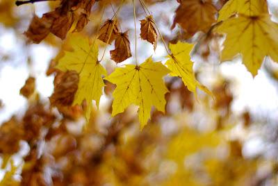 I love fall-really