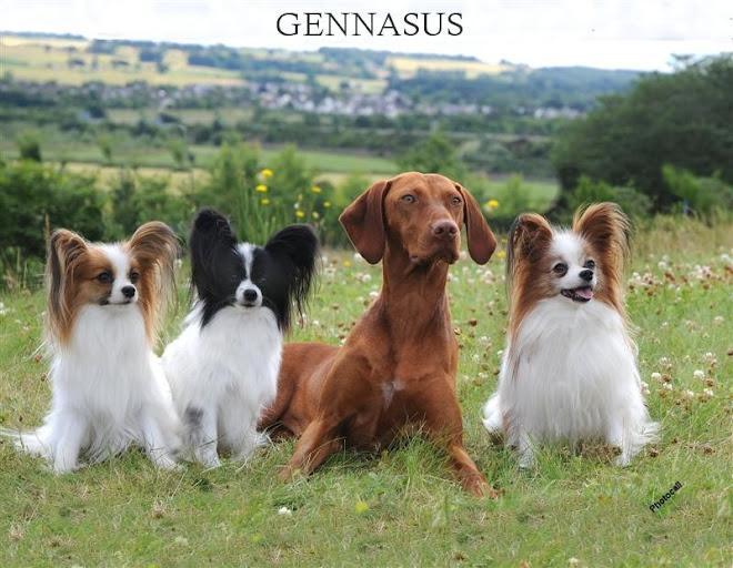 Gennasus