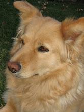 Anna Dog
