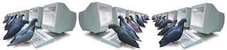 Pigeon Rank System