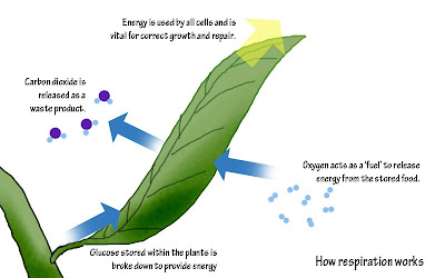 energy flow in desert ecosystem