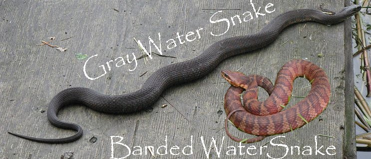 how to make snake trap with results