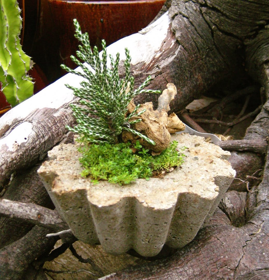 Karin grow make your own concrete planter Concrete planters