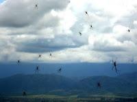 مطر من العناكب يسقط من سماء الأرجنتين صور بفيلم