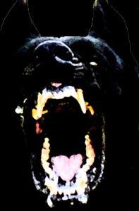 ظاهرة الكلب الأسود