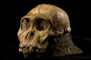 Nuevo homínido: Australopithecus sediba