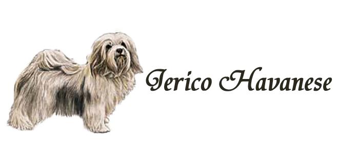 Jerico Havanese