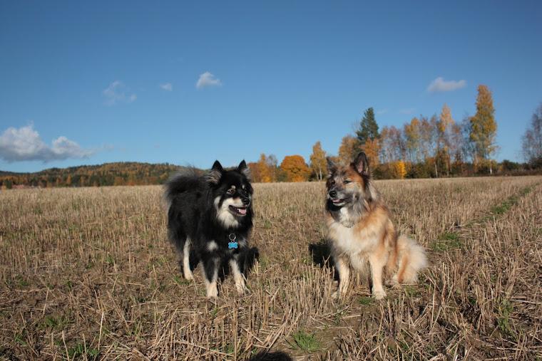 Barfi og Vina