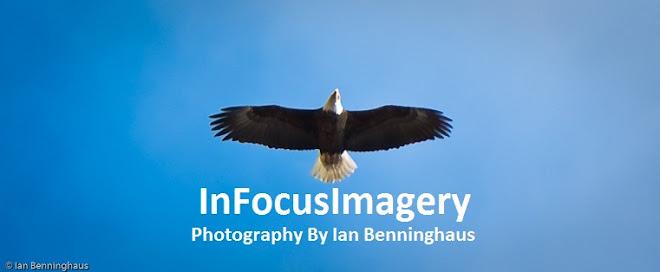 InFocus Imagery