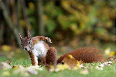 عکس از حیوانات زیبا