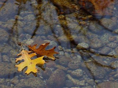 Autumn Tree Image