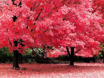 کاغذ دیواری های فصل پاییز و درختان و منظره های زیبایش -www.pccity.ir