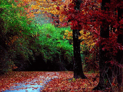 Autumn Tree pics