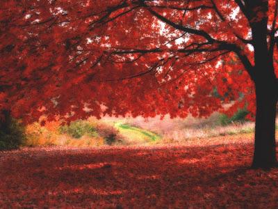 کاغذ دیواری های فصل پاییز و درختان و منظره های زیبایش - www.pccity.ir