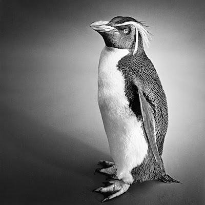 black and white photo animal
