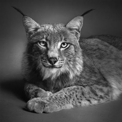 White And Black Picture Of Animals