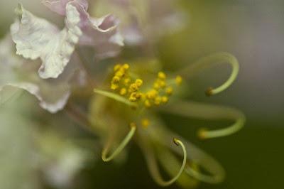 عکس از گلهای زیبا