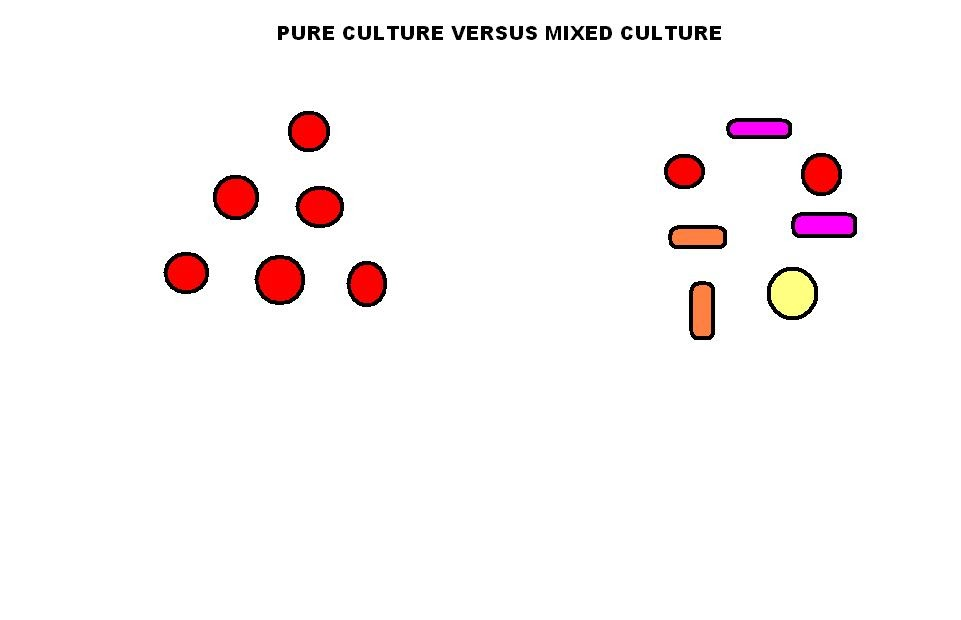 how to obtain a pure culture from a mixed culture