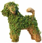 Obama family's new puppy