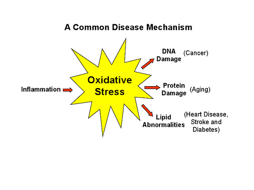 the harmful effects of stress in the united states United states air force  stress, cellular signal  acute inhalation of dust containing high concentrations of vanadium can cause harmful health effects.