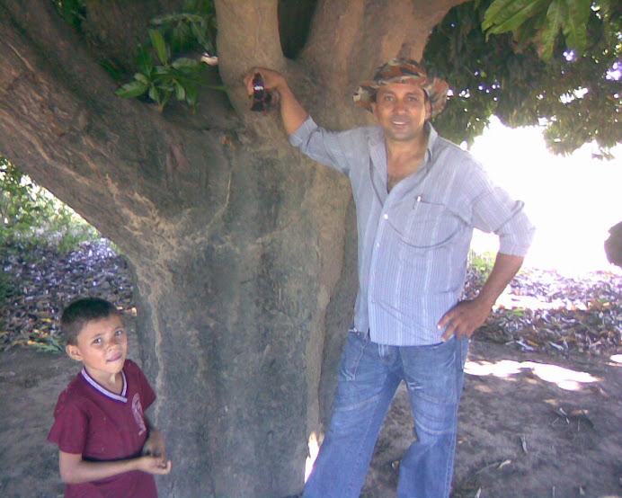 LUIZ ROCHA e mangueira centenária