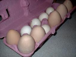 2009 Eggs