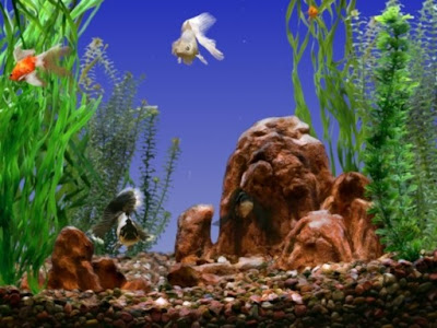 goldfish tank size. Goldfish Aquarium Screensaver