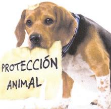 NO LO ABANDONES, ÉL NUNCA LO HARÍA.  ZARPA (ZARAGOZA PROTECCIÓN ANIMAL)