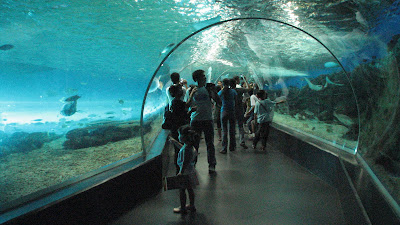 Manila Ocean Park: Oceanarium [April 2010] 10