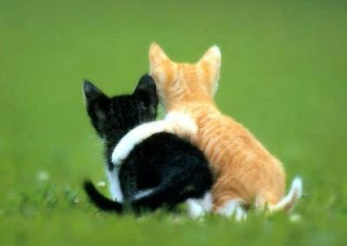 relações, interpessoais, empatia, gatinhos, animais, gatos, felinos