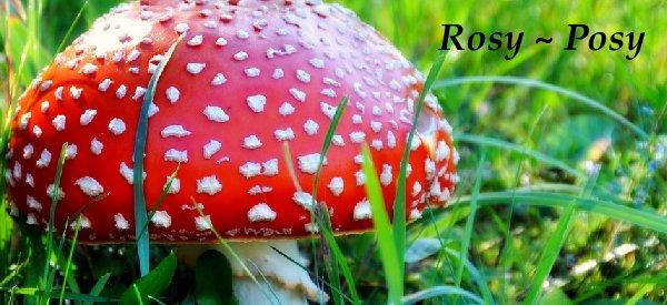 Rosy ~ Posy
