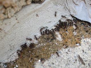 Kill ants