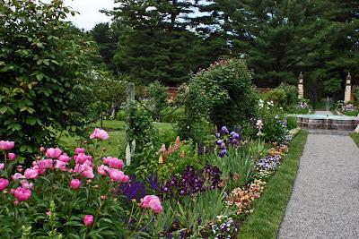 combinatie de culori roz si mov in gradina