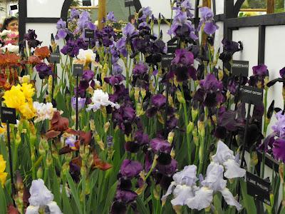chealsea show plante, specii, game de culori noi,totul pentru gradina iris