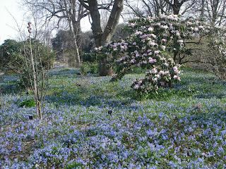 bulbi si rhododendron infloriti primavara