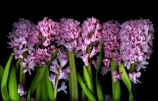 planta inflorita primavara
