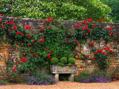 culorile unei gradini romantice