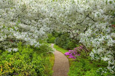 poza gradina romantica japoneza cu azaleea