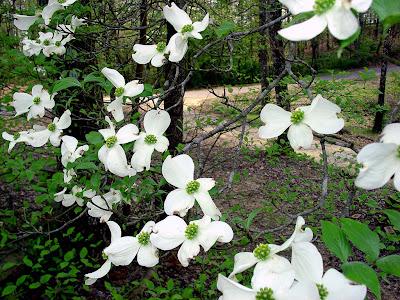florile pomilor in gradina romantica
