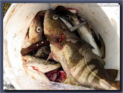 Bucket_of_Icelandic_Cod