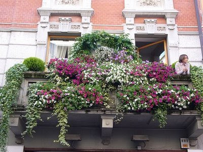Window Flower Boxes Ideas