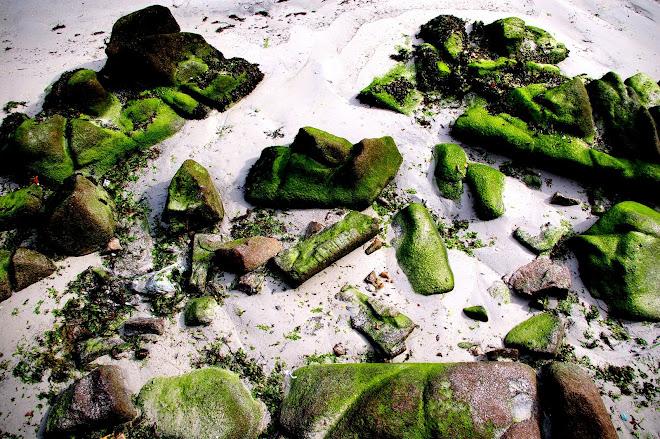 musgo y arena