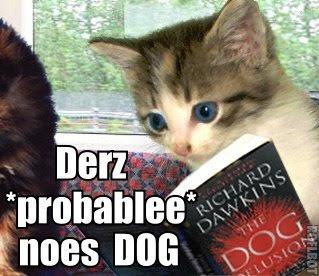 lol cat no dog