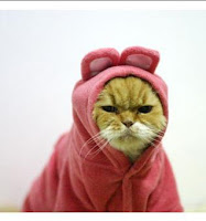 http://3.bp.blogspot.com/_V0__Pjv5paI/ScWq4LBTadI/AAAAAAAACyU/nVOYcdxQ0WQ/s400/angry-cat-in-pink-rabbit-costume-1.jpg