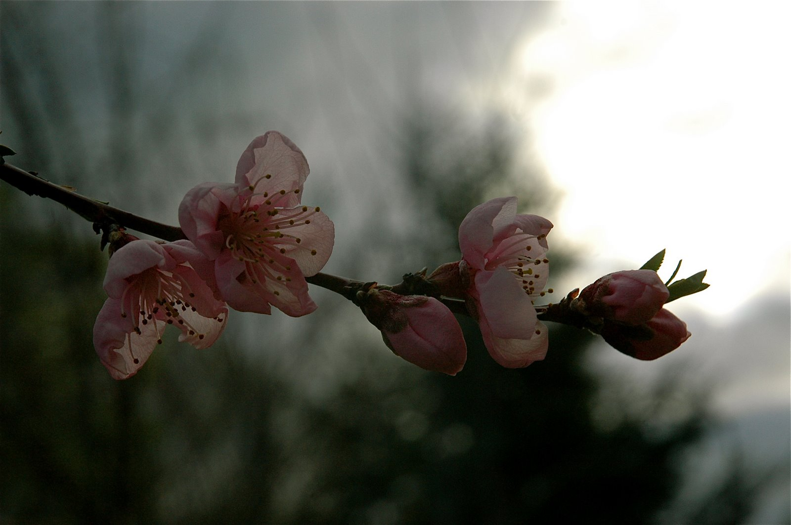 http://3.bp.blogspot.com/_V1au4huIbYA/SfdIAYOkqZI/AAAAAAAAISs/UNUg0QsZeIE/s1600/DSC_0183.JPG