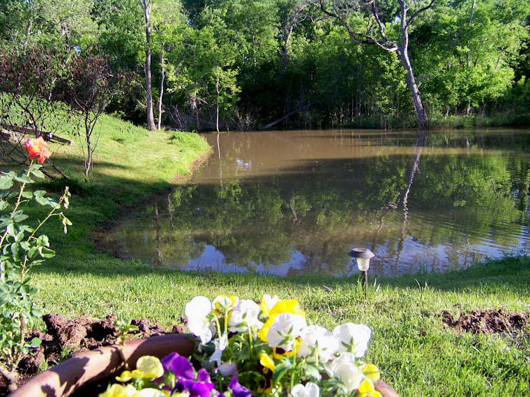 The Pond at Soldier's Heart