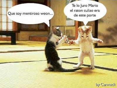 Gatos chistosos