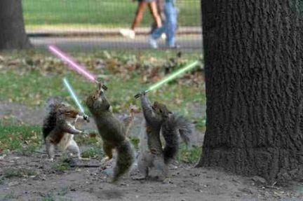 Squirrel Wars